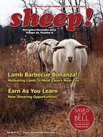 Sheep Magazine Cover